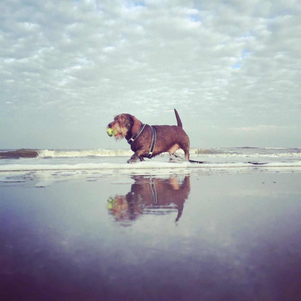 Naar het strand met de hond